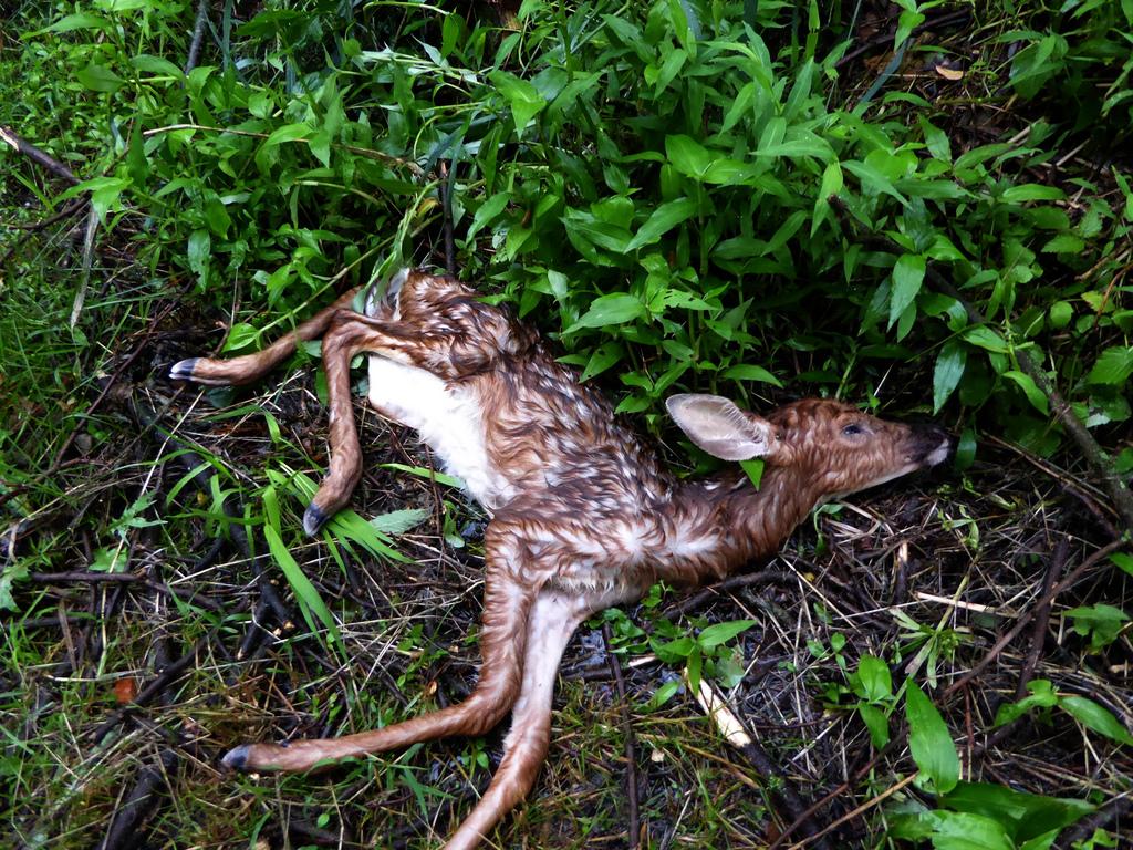 Po pátém dnu umírají okolní koloušci