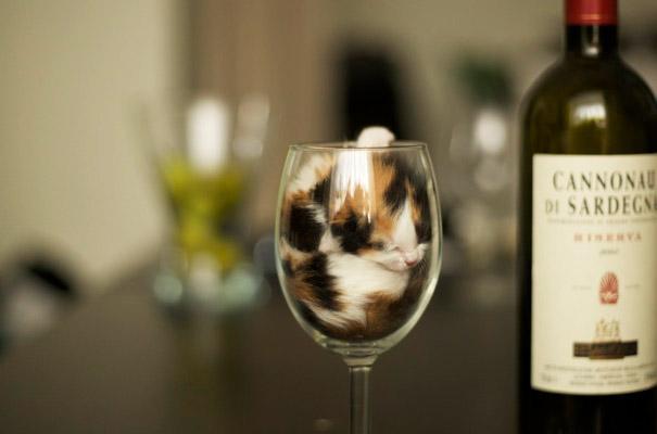 funny-liquid-cats-3-huffingtonpost.com