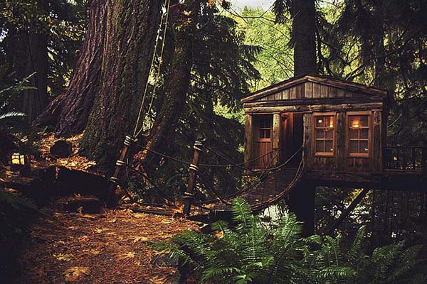 08-Treehouse-in-Seattle-USA