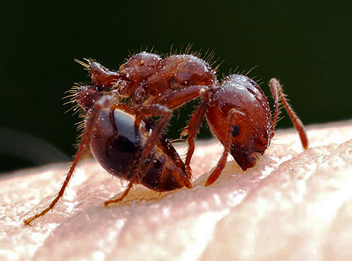 red_ant_cisr_ucr_edu