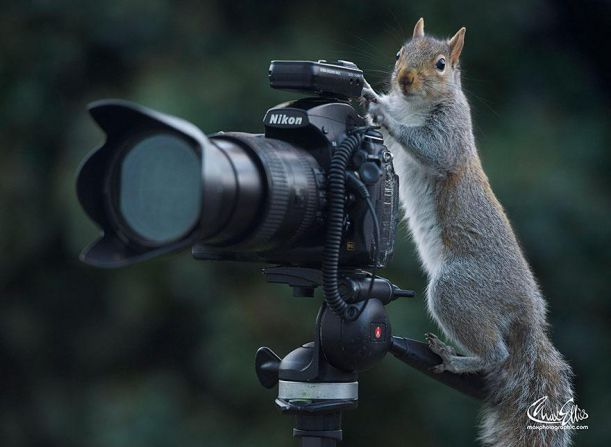 wildlife-photography-squirrels-max-ellis-14__880