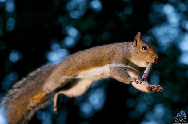 wildlife-photography-squirrels-max-ellis-5__880