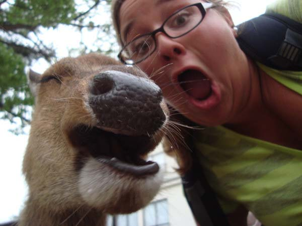 animal-selfies9