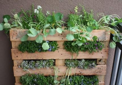diy-small-space-vertical-garden-of-a-pallet