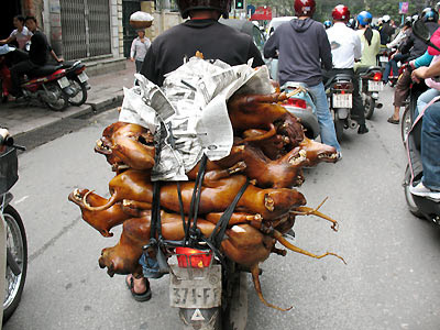 dog-meat