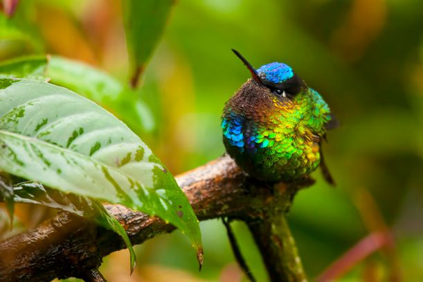 cute-beautiful-hummingbird-photography-2