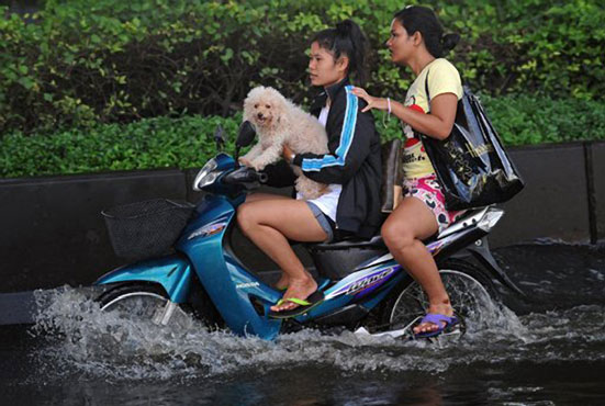 Dog-Riding-Motorcycle-Thailand