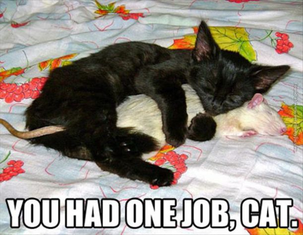 funny-cat-pics-you-had-one-job