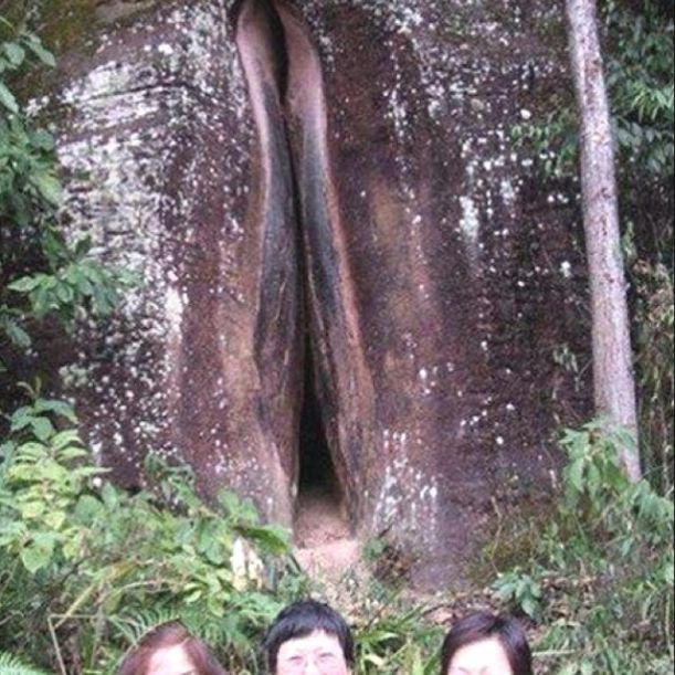 forest vagina