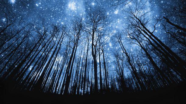 Výsledek obrázku pro noční les