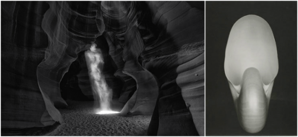 Peter Lik: Phantom (2014) / Edward Weston: Nautilus (1927)