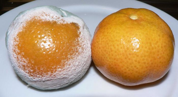Penicilin na pomeranči.
