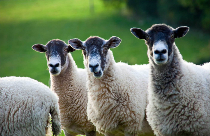 Typičtí Češi – blbě čumí a zaplatí, co se jim řekne a v hlavě mají seno.
