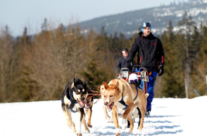 Psi vyrůstají a trénují se ve výškách tisíc metrů nad mořem 43bcb77866