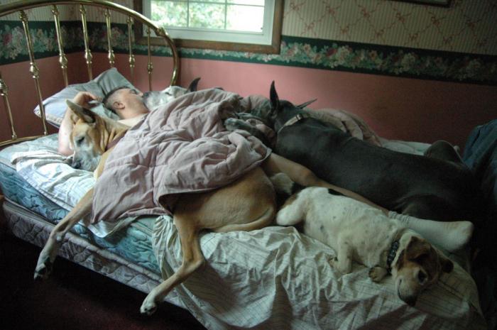 Čím více zvířat žije ve společné domácnosti, tím je podle výzkumu jejich vliv na kvalitu spánku horší.