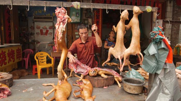 Psí maso podle chuti neodlišíte od hovězího