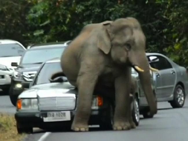Už zase ten stupidní slon. To nemá nic lepšího na práci, než vám každý týden prosednout auto?