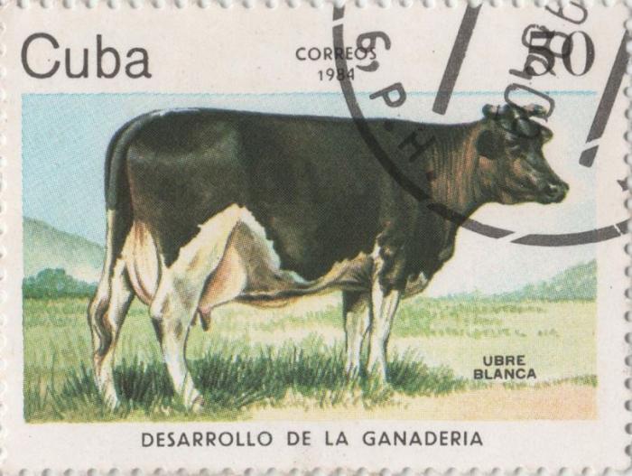 Kráva s výmluvným jménem Bílé vemínko to dotáhla až na poštovní známku.