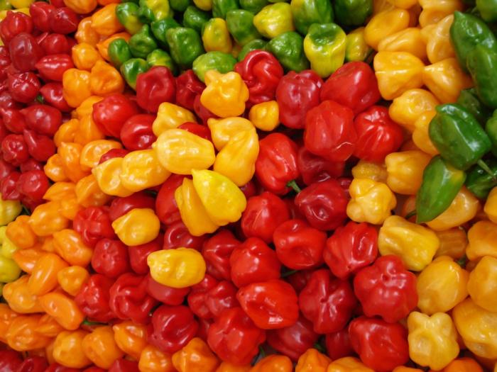 Jedny z nejpálivějších, komerčně dostupných papriček – habanero. Podle Scovilleovy stupnice pálivosti, tedy obsahu kapsaicinu, je tisíkrát ostřejší než pimento a stokrát víc než jalapeño