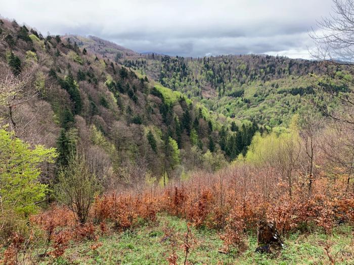 Pohoří Čergov, ve kterém se nachází první soukromá rezervace Vlčia, již spravuje Lesoochranářské sdružení VLK, jehož je je Jural Lukáč náčelníkem