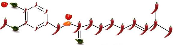Molekula kapsaicinu: dlouhé feferonky jsou uhlíky C, zelené papričky kyslíky O, baňaté červené papričky vodíky H a ta jedna žlutá je dusík N.