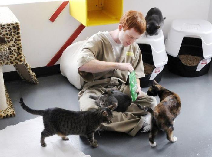 Vězení by neměl být jen trest. mělo by v něm docházet k nápravě - a v tom kočky mohou pomoci