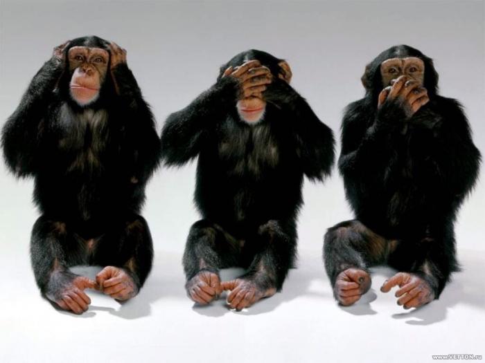 Proč to neumí Markéta, když to umí šimpanzi?