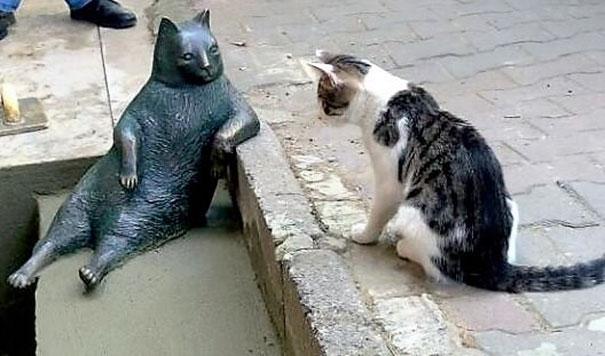 Kočky z okolí se přicházejí poklonit nejznámější parťačce z města