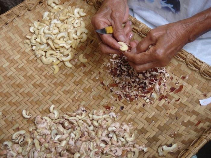 Loupání kešu spočívá v odstraňování jedovatých částí plodiny. Bez rukavic je to lahůdka.