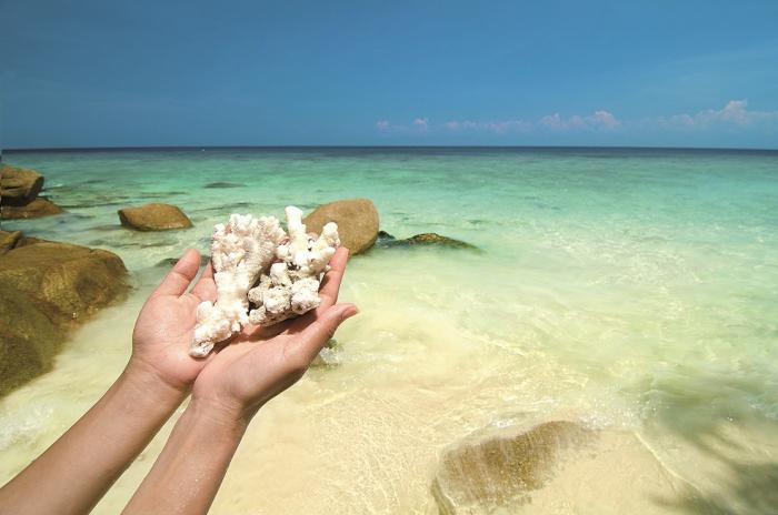 V případě korálů vysoké pokuty a odstrašující příklady zabraly, ale písku a mušlí jsou přece všude tuny, no ne?