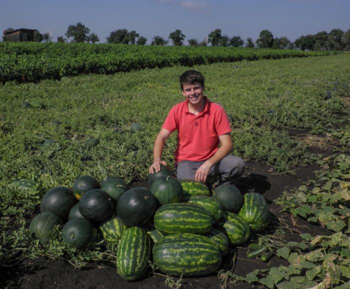 Melouny se ostatně pěstují v Polabí i dnes, jak ukazuje (a dokazuje) hrdý pěstitel z rodinné farmy Jamboz