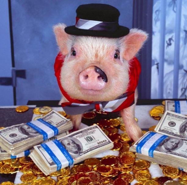 Maso je vražda a peníze jsou taky vražda.