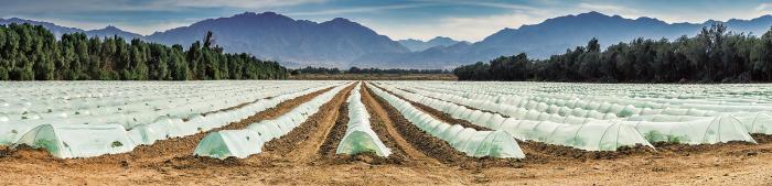 Ne, to není jahodové pole kdesi v Itálii, ale člověkem zkultivovaná poušť v Izraeli.