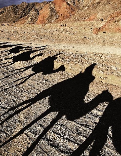 Negevskou poušť můžete poznat i ze hřbetu velblouda na celodenním treku.