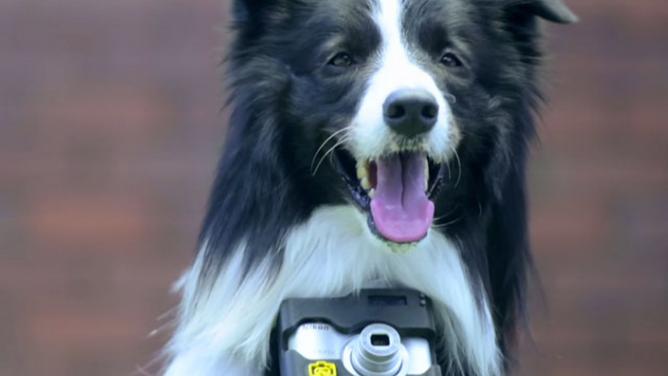 18snímků pořízených vaším psem: speciální foťák sám pozná, co ho právě zaujalo!