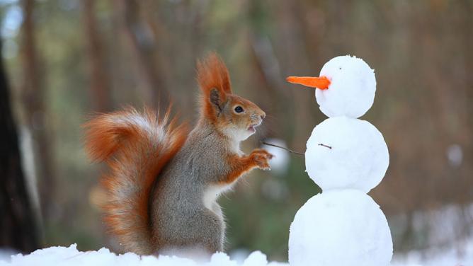 Rozverné veverky umí stavět sněhuláky