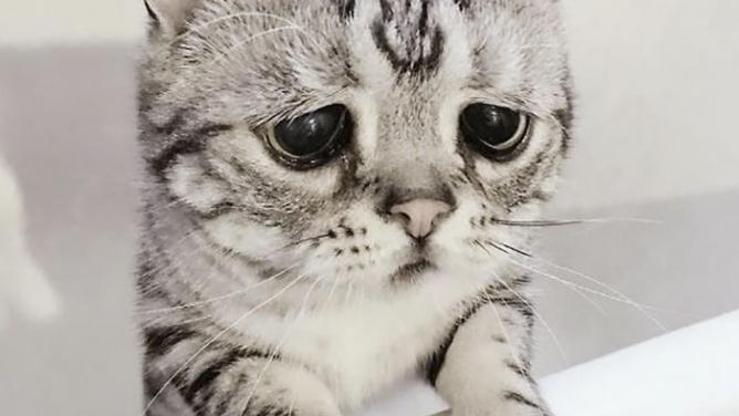 Seznamte se sLuhu, nejsmutnější kočkou na světě!