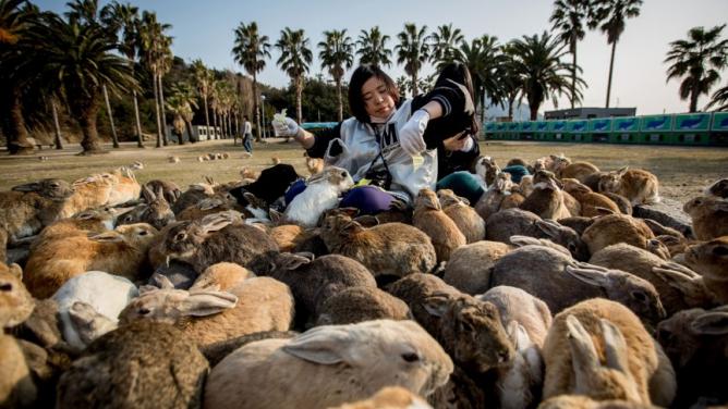 9míst, kde zvířata vládnou lidem