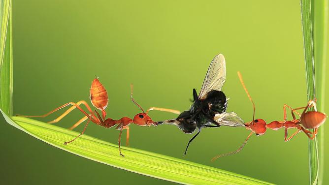 9úžasných fotek mravenců, co vědí, jak je těžké urvat kusžvance