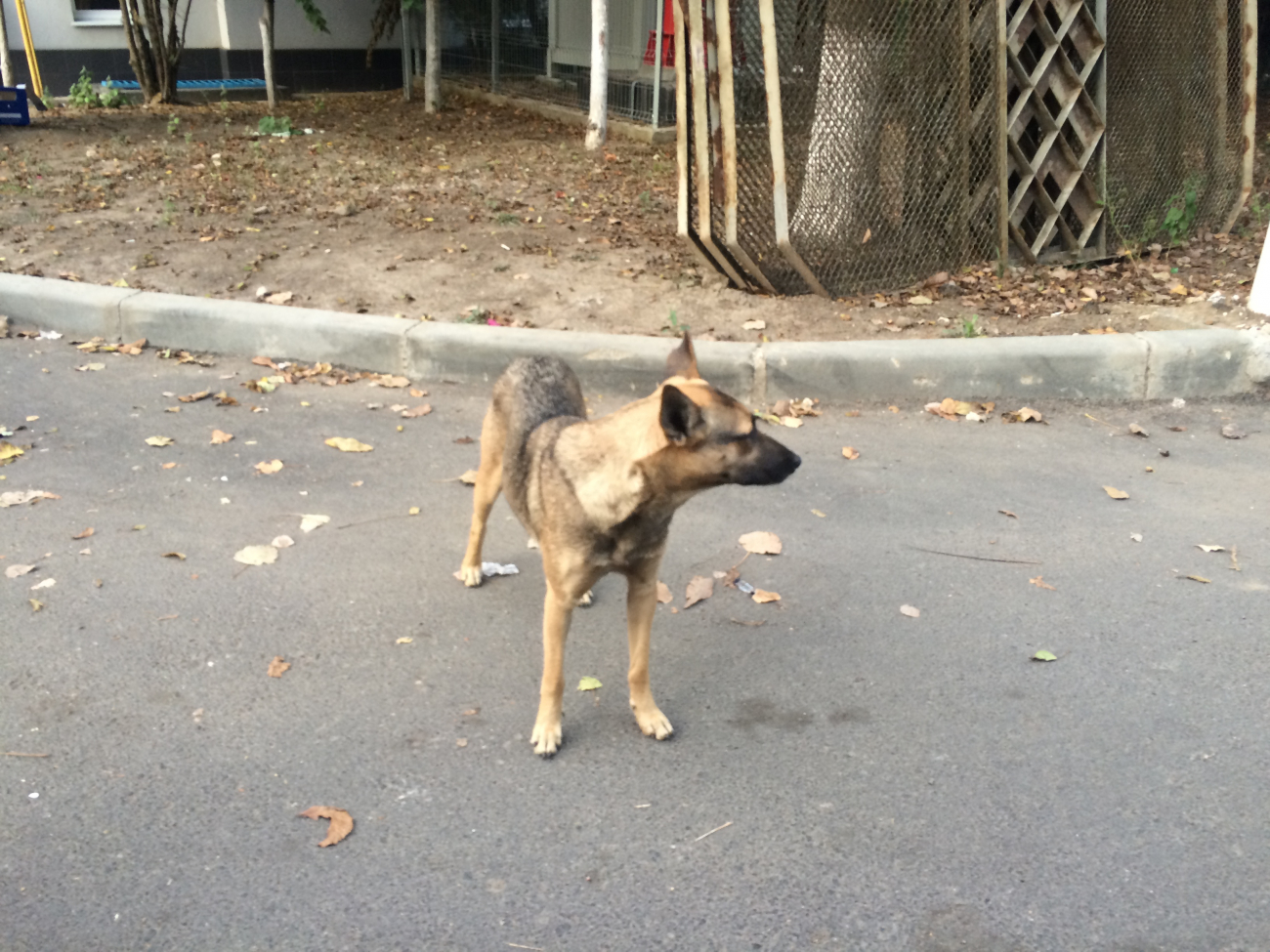 Ukrajinský pes.