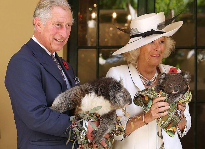 Princ Charles má ke koalám vstřícnější vztah než jeho otec.