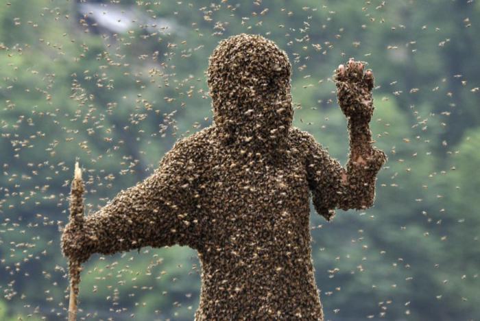 Od té doby, co chovám včely, se manželce na zahradě přestalo líbit