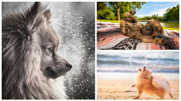 Život je pes, ale krásnej!