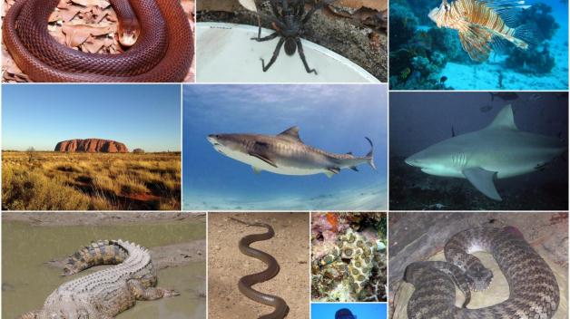 Nebezpeční tvorové Austrálie