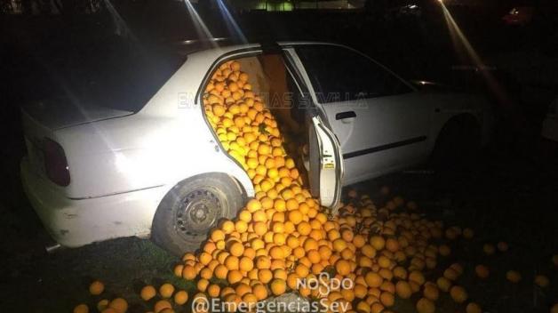 Je zima, imunita se musí posilovat! Ve Španělsku parta lupičů ukradla čtyři tuny pomerančů.