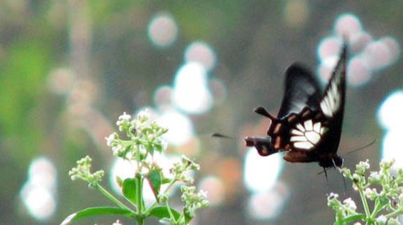 web s motýly