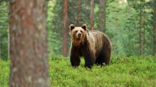 Źeny bývají pomalejší než muži, což se hodí, když narazíte na medvěda