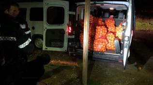 Proč šli zloději zrovna po pomerančích, to zatím nikdo neví. Upřímně doufáme, že sevillští strážníci záhadu brzy rozkryjí.