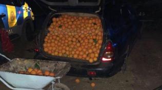 Ovoce bylo tolik, že při otevření dveří vozů padalo přímo na silnici.