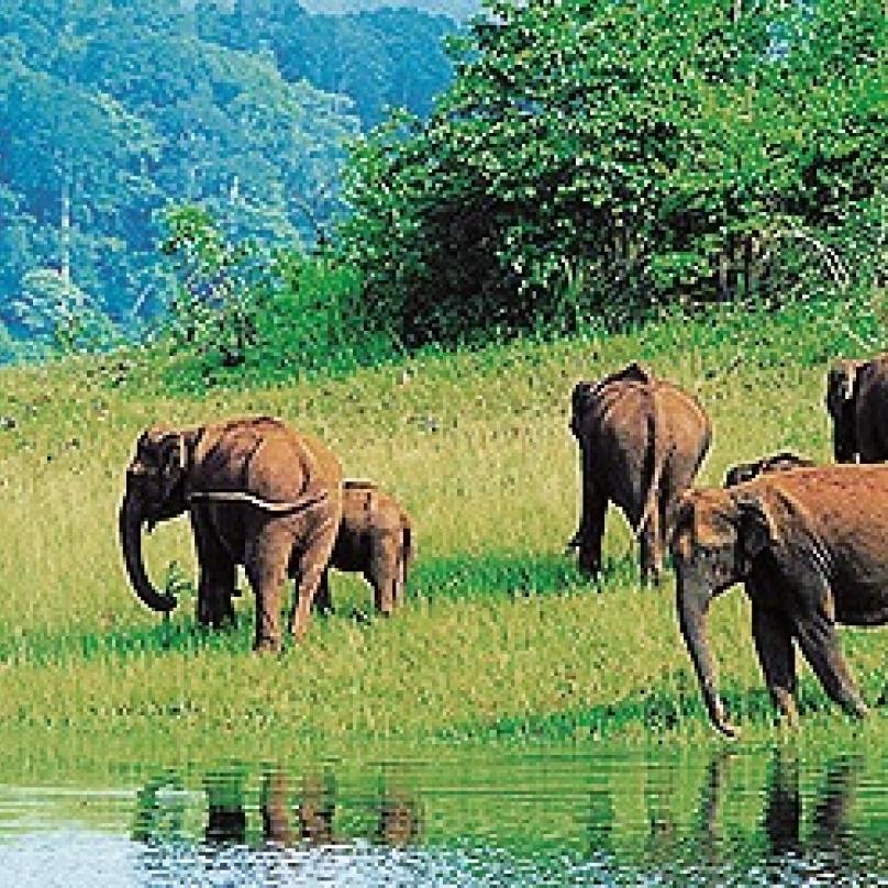 Rezervace Periyar, stát Kerala, Indie – rezervace vyhlášená před čtyřiceti lety jako tygří je dnes paradoxně známá hlavně díky své sloní populaci. Navíc hned vedle je město Kumi, proslulé svými rozsáhlými plantážemi koření.